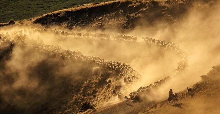 Sürülerin Nemrut Dağı'na tozlu yolculuğu