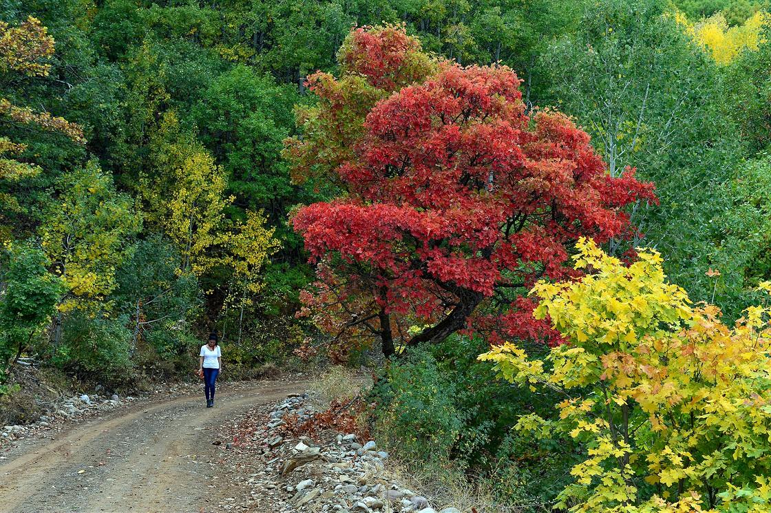 Tunceli ormanları sonbahar renkleriyle bir başka güzel