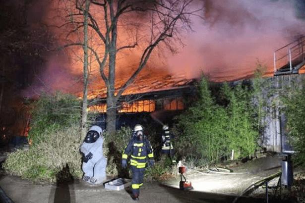 Almanya'da hayvanat bahçesinde yangın: 30'dan fazla maymun öldü