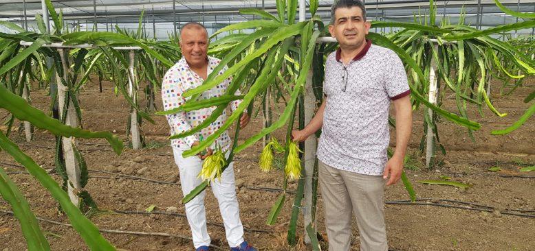 Manavgat'ta muz üretimi uyarısı
