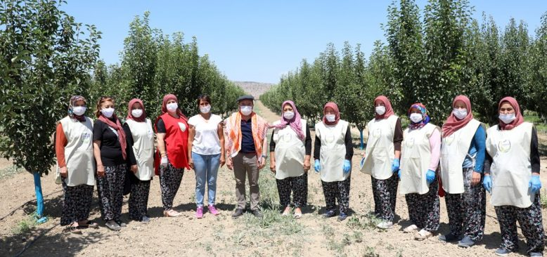 Kadın üreticilerden siyez buğday hasadı