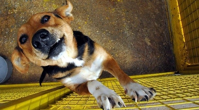 Hindistan'ın Nagaland eyaletinde köpek eti satışı yasaklandı
