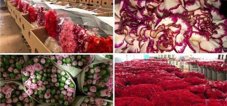 Paniğe kapılan kesme çiçek sektörünü 'yayla' kurtardı