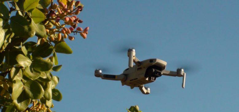 Fıstık Hırsızlarına Karşı 'Drone'lu Nöbet