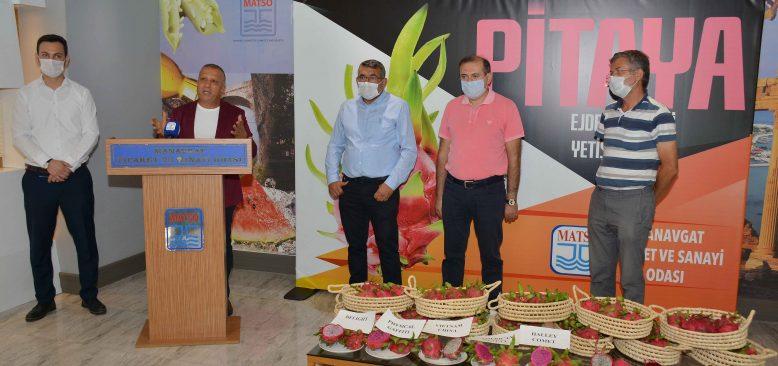 Ejder meyvesi Pitaya ihracında hedef Avrupa ve Rusya
