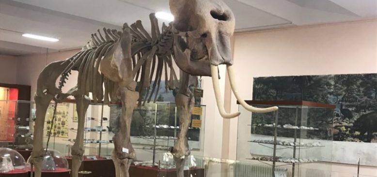 İzmir Tabiat Müzesinde Dünya Tarihine Yolculuk