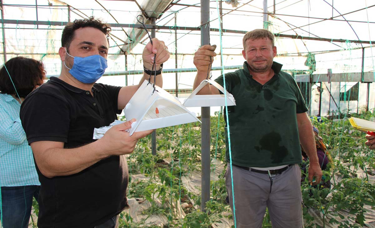 Seralarda sağlıklı üretim için böcekli mücadele