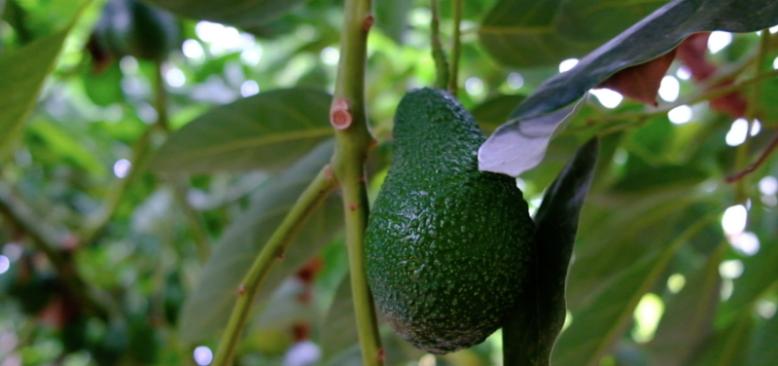 Tropikal Meyve Cenneti Mersin