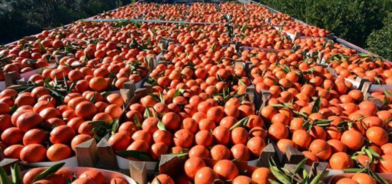 Portakalda yüzde 100 analiz üreticiyi vuracak