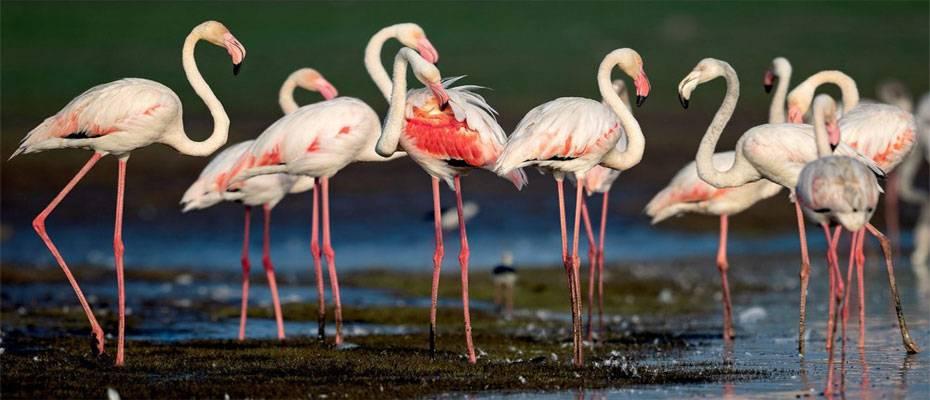 Kuşlar ve Turizm