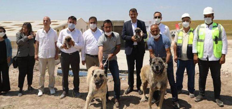 'Anadolu Aslanı' Kangal köpekleri için teknolojik tesis açıldı