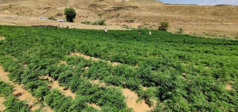 Bingöl'de Damla Sulama Sistemli Uyuşturucu Tarlası