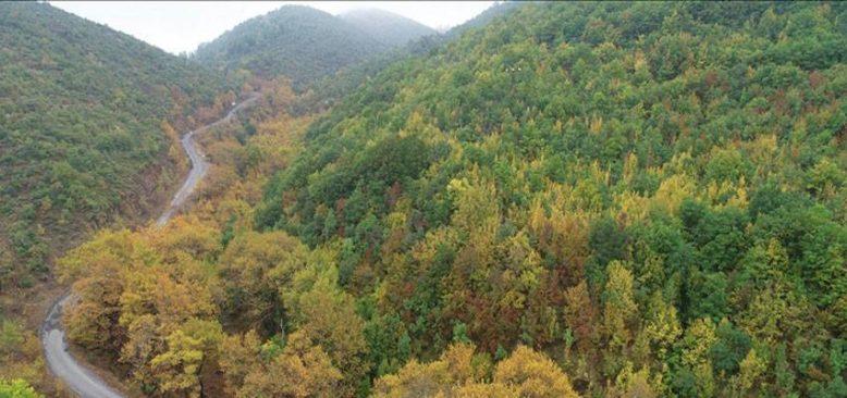 Ganos Dağı eteklerindeki ormanlar sonbahar renklerine büründü