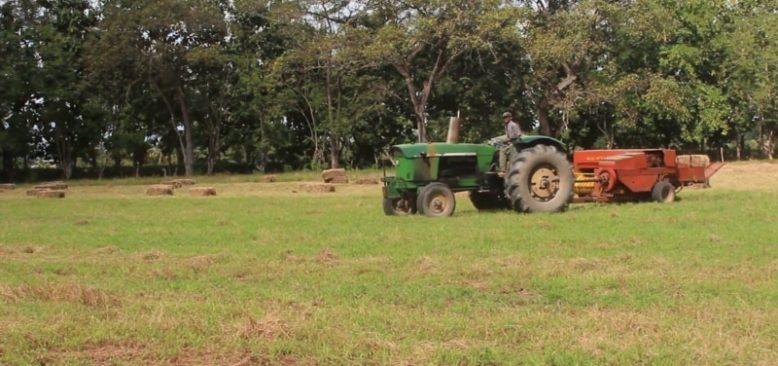 Latin Amerika'da Tarım Ürünleri İhracatı Arttı