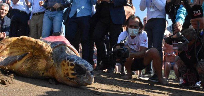Muğla'da 2 caretta caretta ile yeşil deniz kaplumbağasının tedavisi tamamlandı